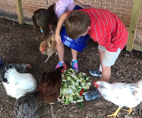 Archer cluster chicken coop provides learning opportunities and a sense of community